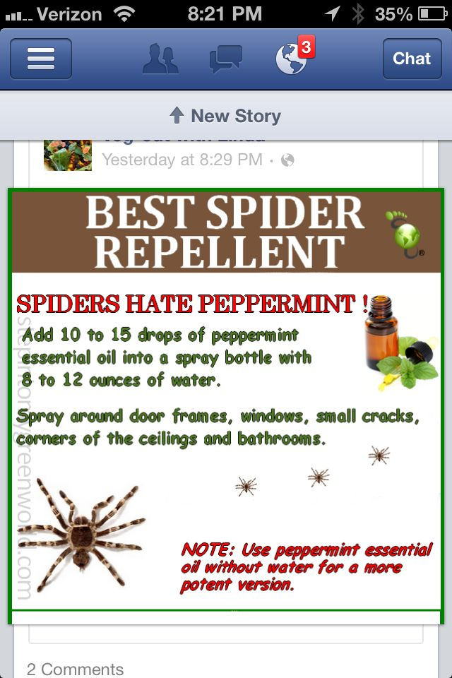 how to get rid of spiders in your home naturally
