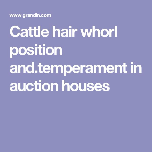 Cattle hair whorl position and.temperament in auction houses