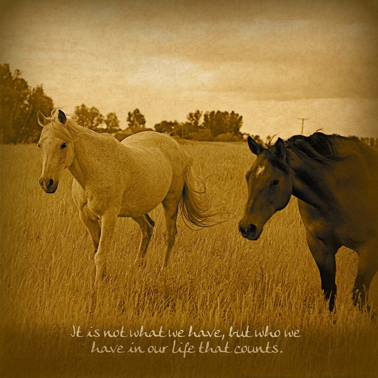 Those in your life.Beautiful Horses, Equine, Life, Hors Ect, Club Cowgirls, Hors Quotes, Hors Practice, Inspiration Videos, Animal