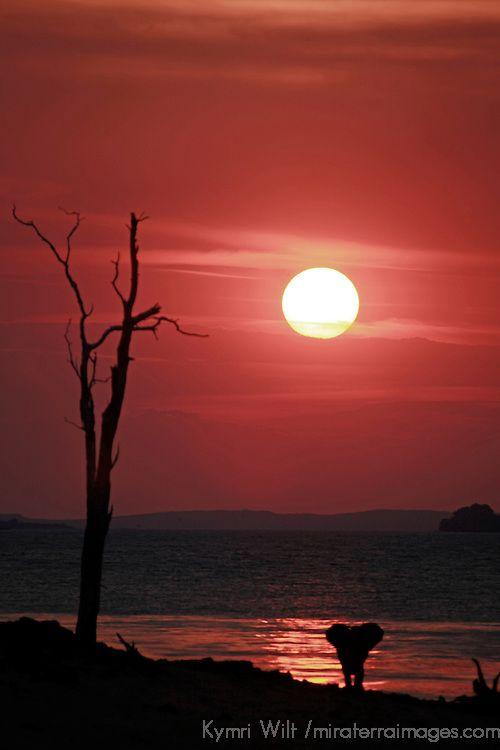 The sun sets as a lone elephant watches from the shore of Lake Kariba, Bumi Hills, Zimbabwe.  http://theexplorerclubafrica.com/properties/bumi-hills-safari-lodge-spa.php