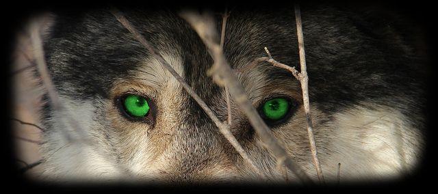 ace the grey   Beautiful Creatures   Pinterest