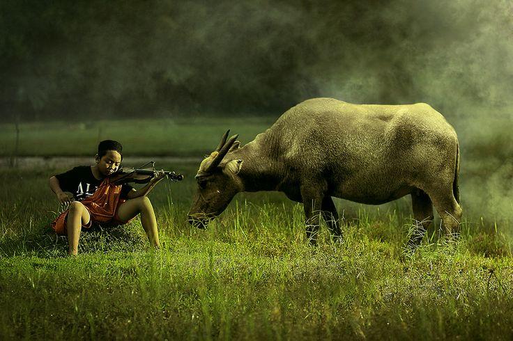 Twilight Symphony by Senpu Gardok on 500px