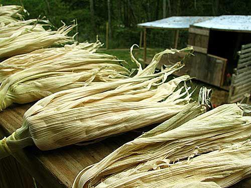 Cáscaras de secado - Retirar la cáscara de su maíz de verano de una sola pieza y cuelgan a secar. En el otoño se puede meter en canastas con maíz y alrededor de sus calabazas. ------------ Drying husks - Remove the husk from your summer corn in one piece and hang to dry.  In the fall you can tuck them in baskets with Indian corn and around your pumpkins.  So autumn and pretty!  And free!!!!
