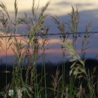 I love the prairies