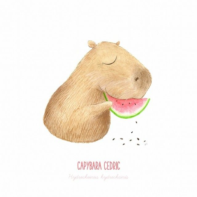 Day 5 // Capybara // Native of South America. Largest rodent in the world…