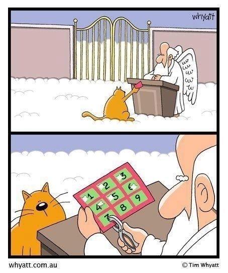 Los gatos tienen un contrato especial con Dios, llega al cielo, le perfora la tarjeta, tiene siete vidas