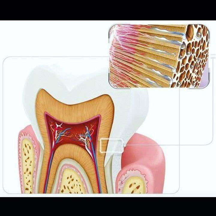 CUIDE DA SUA SAÚDE!! Sabe quando vc sente dor nos dentes quando toma aquela água gelada sorvete ou até mesmo uma sopa bem quentinha? Isso chama-se hipersensibilidade dentinária. Ela ocorre quando há exposição da dentina que sob ação de calor ou frio faz com que as terminações nervosas reajam gerando a sensação de dor. As principais causas das sensibilidades são: Escovação excessiva Gengivite Ranger os dentes Retração gengival Uso de cremes dentais abrasivos Restaurações quebradas infiltradas…
