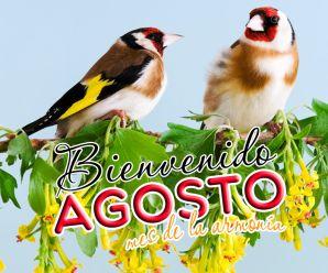 Imagenes De Pájaros Con Mensajes Bienvenido Agosto