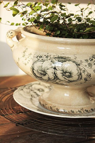 angelvine in old tureen