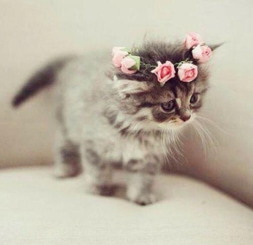 Beautiful Kitten wearing a rose headband