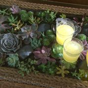 Make a beautiful terrarium coffee table when you plant easy-to-grow succulents under a glass top. We'll show you how on The Home Depot's Garden Club.