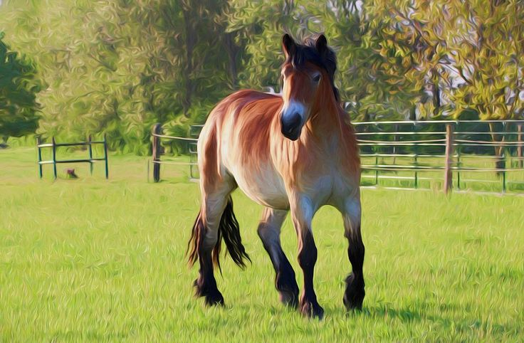Free Jigsaw Puzzles Online - HORSE PAINTING  #Game #JigsawPuzzle #Puzzle #horse