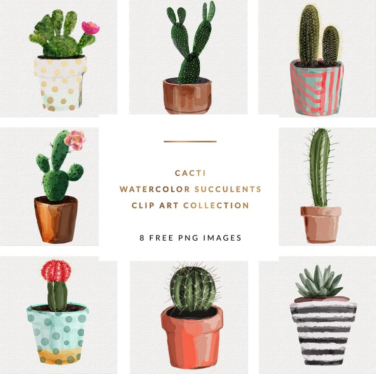 FREEBIES | Watercolor Succulents cactus clip art collection | 8 FREE PNG IMAGES