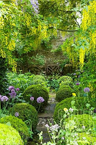 Barnsley house gardens, allium purple sensation planted beneath aburn archway...