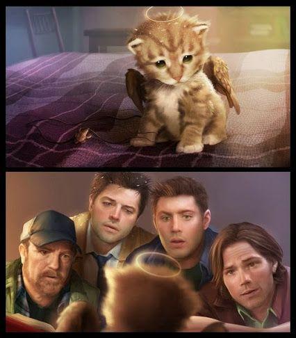 Awwwww - Angel kitten & Supernatural - Dean Winchester, Sam Winchester, Castiel, Bobby Singer