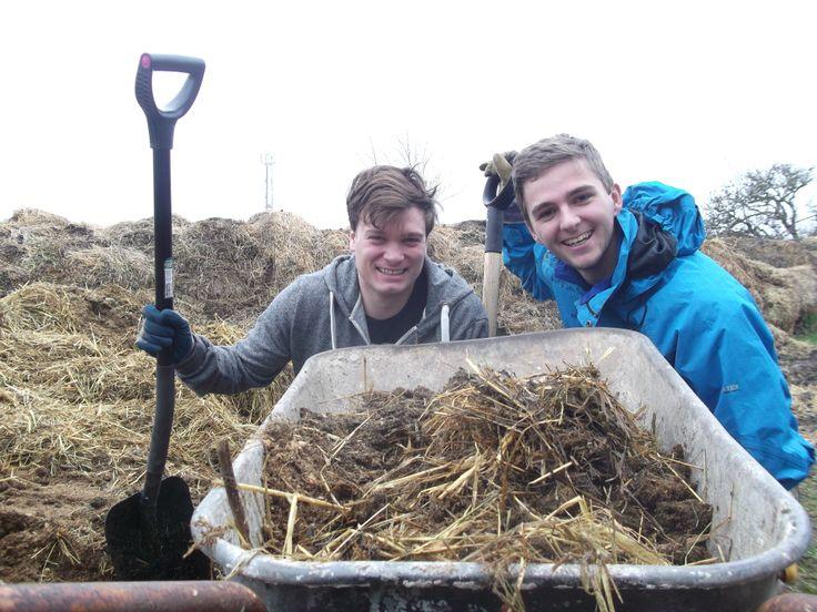 Daniel og Jacob i gang med at skovle hestemøg til gødning af haven
