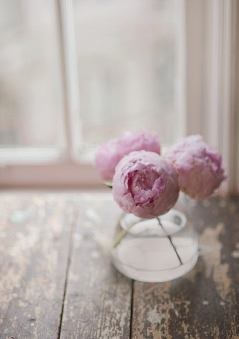 peonies: Favorite Flowers, Spring Flowers, Pink Flowers, Weather Wood, Flowers Bouquets, Soft Pink, Pale Pink, Fresh Flowers, Pink Peonies