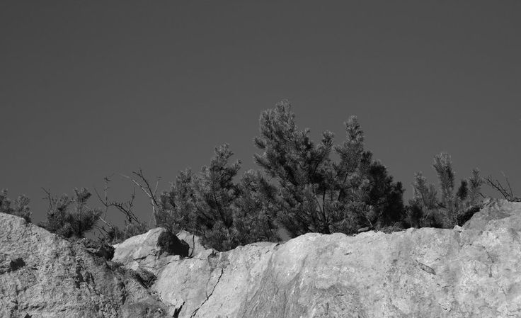 tiny pines by minnamaria.deviantart.com on @deviantART