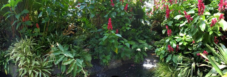 Tropical Garden, Brazilian Red Cloak