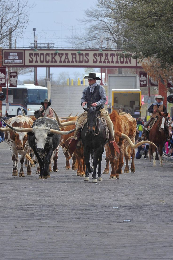 Twice a day the herd of Longhorn cattle owned by the city of Ft. Worth, TX are paraded down Exchange Ave in the old Stockyards.