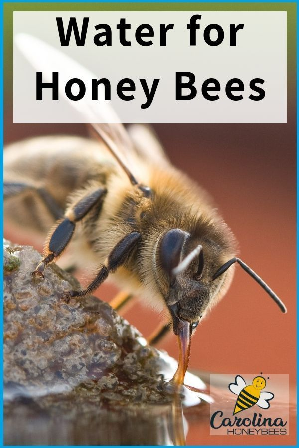 Water For Bees In Your Backyard Carolina Honeybees Water For Bees Bee Keeping Bee