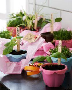 IKEA Österreich, Inspiration, Küche, Setzlinge gepflanzt in SOCKERKAKA Silikonbackformen in verschiedenen Farben