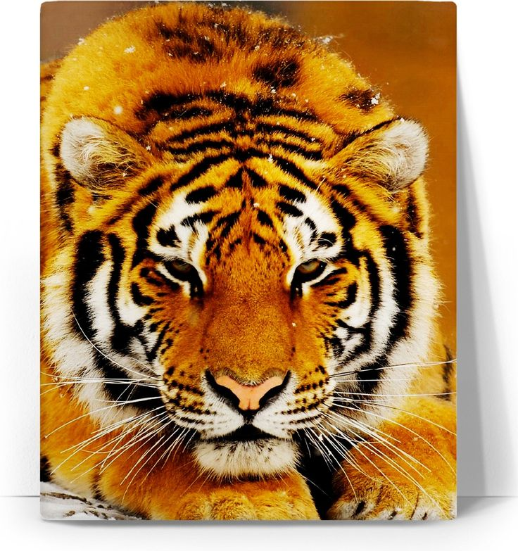 Check out my new product https://www.rageon.com/products/siberian-tiger-canvas-art-print?aff=BWeX on RageOn!