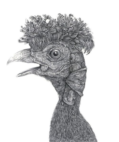 WILDLIFE ILLUSTRATION BY CLAY THOMPSON