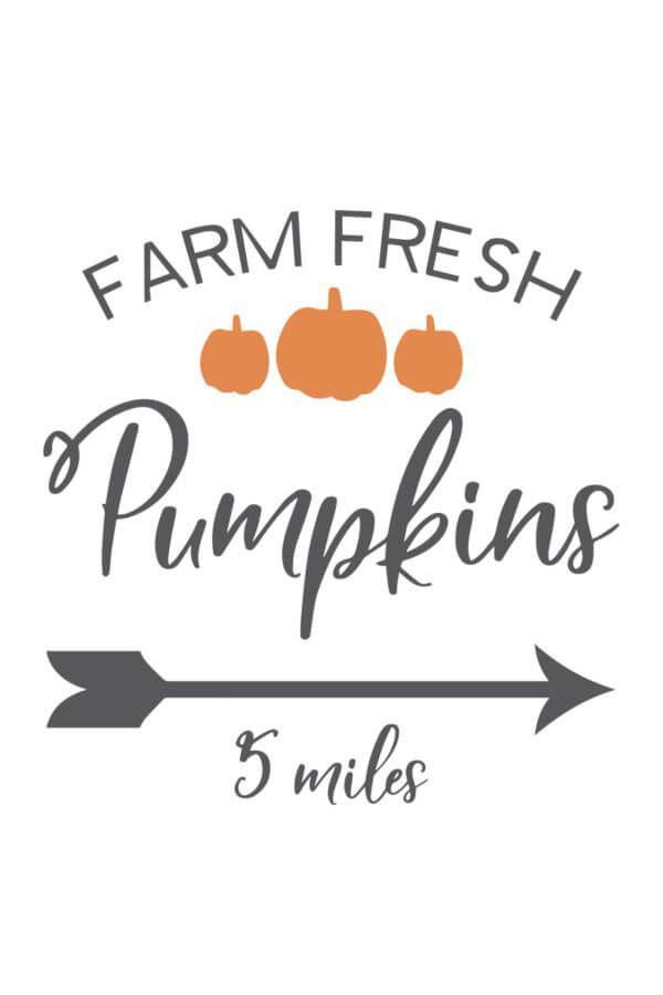 Farm Fresh Pumpkins SVG File | Free Designs to Laser! | Svg file