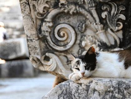 Resting cat at an ancient pedestal, Didyma, Turkey. Robyn Woodward©