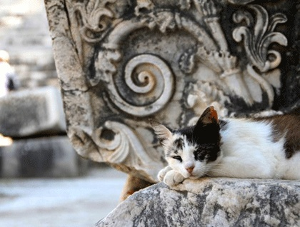 Resting cat at an ancient pedestal, Didyma, Turkey. Robyn Woodward©