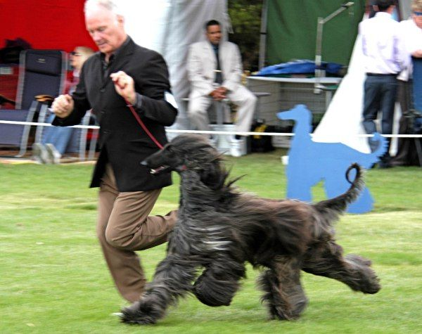 10 best dog shows images on pinterest doggies dog accessories and dsc0108 dd mvg 0309 solutioingenieria Choice Image