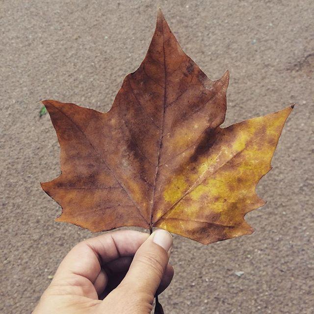 Já cheira a Outono 🍁 #fall #outono #leaves