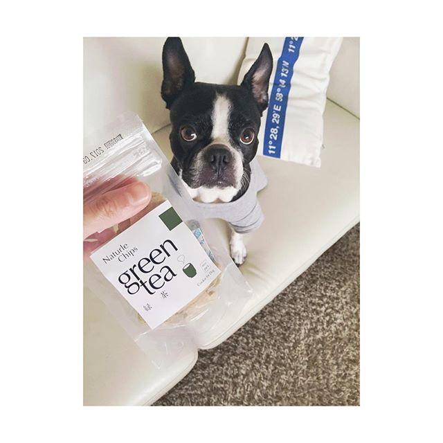 初のgreen teaのおやつ頂きました🐾 nuts、やったね〜🤗 #gm #buhi#bostonterriers #bostonterrier #bostonterrierlove #bostonterrierlife #dog#doglove#love#doglife#pet #instadog#doggy #愛犬#犬#鼻ぺちゃ#ボストンテリア#ボステリ#犬のいる暮らし