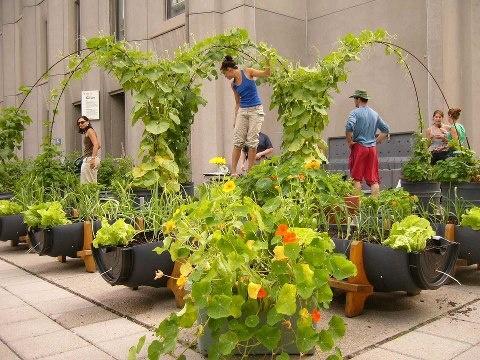 Best Urban Rooftop Farming Images On Pinterest - Rooftop vegetable garden ideas