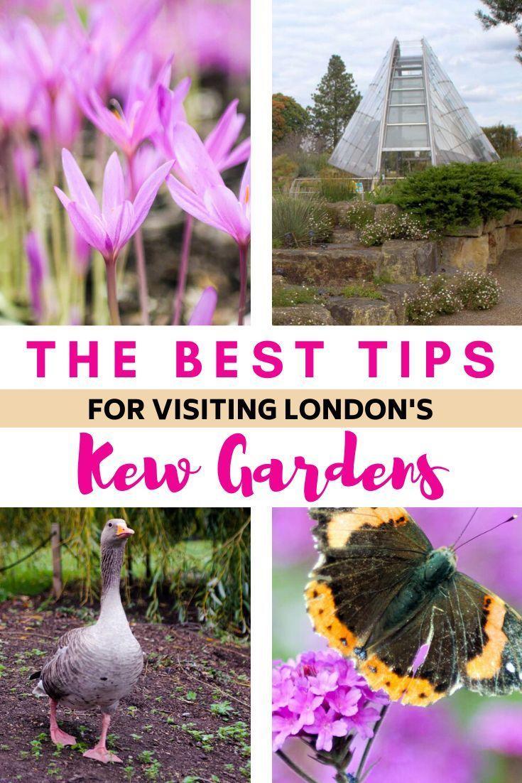 d65322486bf440fbe70df02cdaef160c - Best Day To Visit Kew Gardens