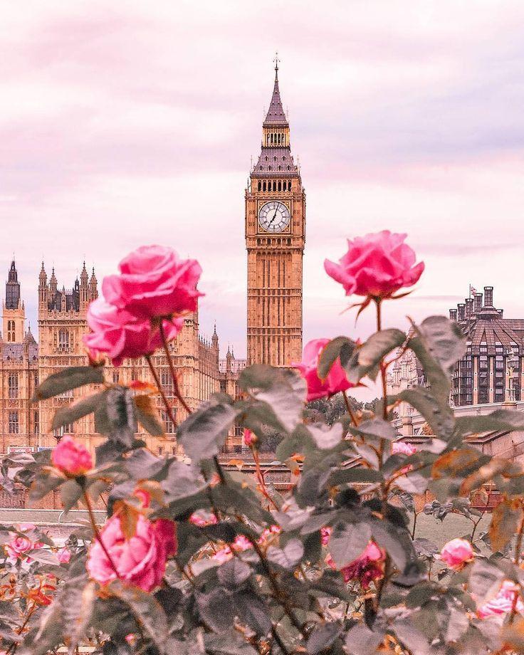 Big Ben – London, Großbritannien – England – Vereinigtes Königreich / Great Britain – United Kingdom + Rosa Rosen / Pink Roses