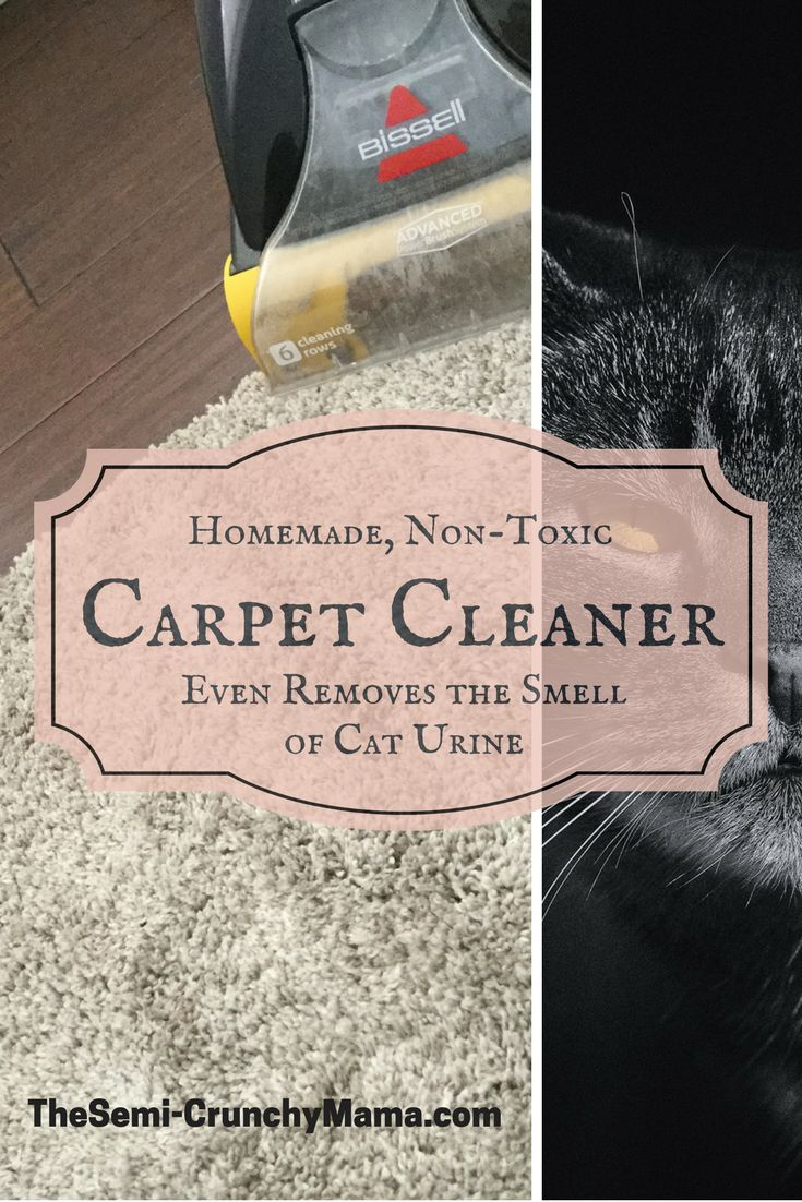 Non Toxic Carpet And Upholstery Cleaner That Even Gets Rid