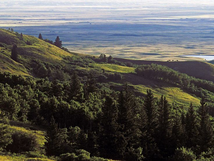 One Of Many Remarkable Views At Cypress Hills Provincial Park Saskatchewan