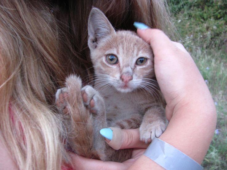 Cat from Hanioti