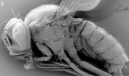 Un español crea una nueva especie animal en laboratorio