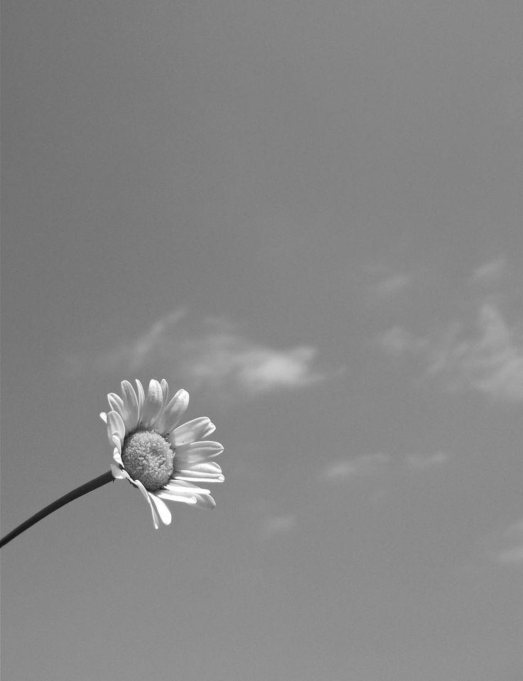 Pëntü mo konümpa mew füwtulu taiñ zuamtün... Txofntxopëmn mo rayen mew ka tañi menalkenüm ñi wëñag...  Con retazos de recuerdos he hilado nuestras memorias... Con el estallido de esas flores he liberado a la nostalgia...  ---- © Claudia Mellado Ñancupil