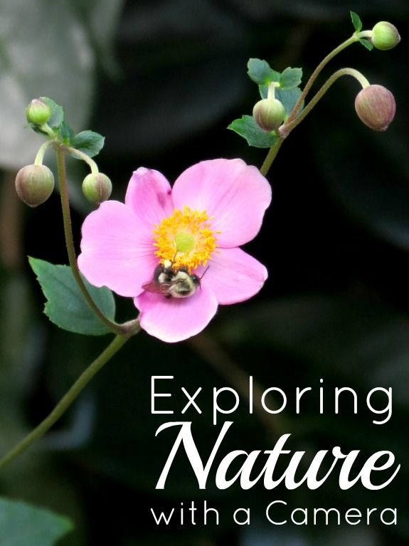 Exploring Nature With Children Diy Nature Explorer Packs: 17 Best Images About Photography For Kids On Pinterest