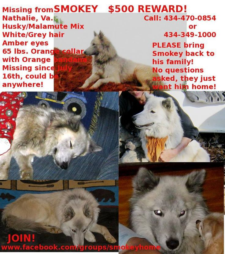 i miss you husky - photo #39
