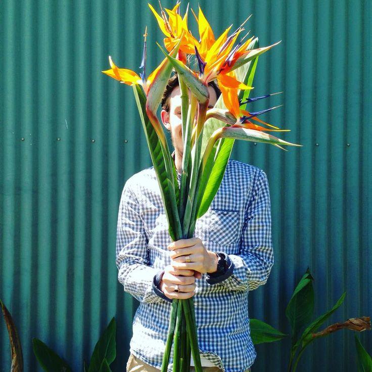 Amazing Strelitzia at Avonlea Flowers