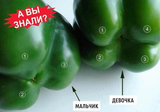 Болгарский перец — настоящий кладезь витамина С. Даже цитрусовые и смородина ему не конкуренты. Да и салаты и другие блюда он дополняет самым лучшим образом. Кроме того, его употребление способствуе…