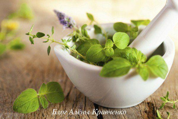 Целебные травы, которые благотворно влияют на нервную систему и способствуют хорошему сну. 10 трав, которые полезны для нервной системы.