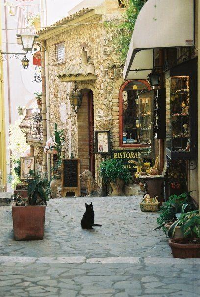Cat in Italy