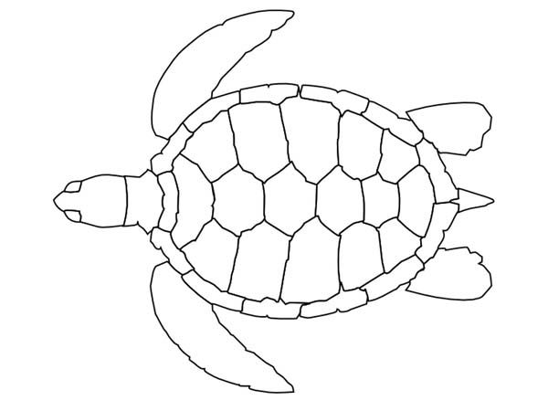 Sea Turtle Pattern Coloring Page - Free & Printable Coloring Pages ...