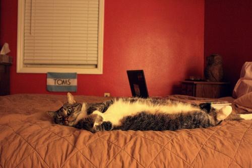 Love when kitties do this, so cute: Cats Cat Th, Comfy Cat, Cat Things,  Polecat, Cat Sleep, Fat Cat, Pet Photo, Cat Laying, Cat Cat Th